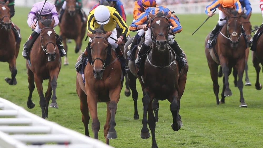 Horse Racing NAP